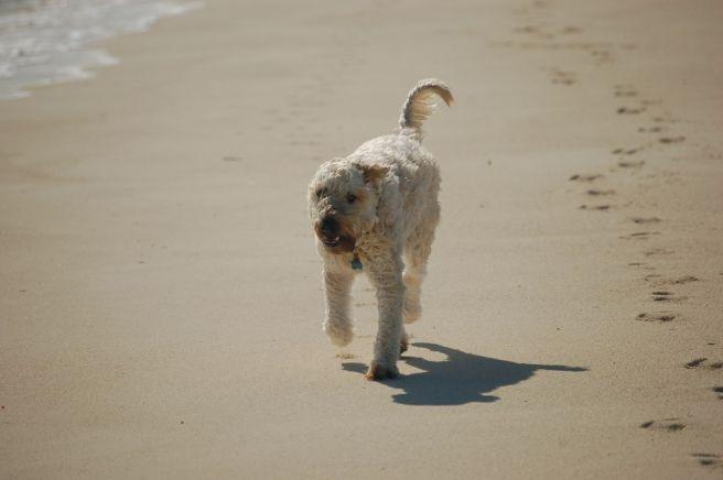 Farley Running