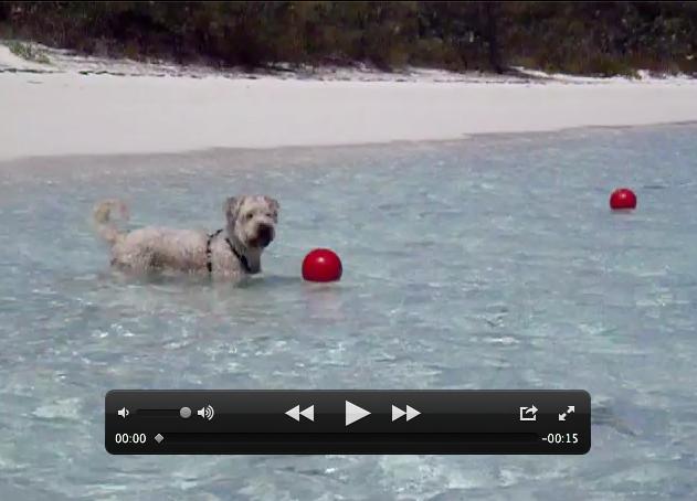 Farley Wants The Ball