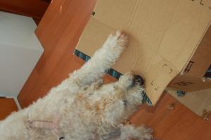 Farley and box 2