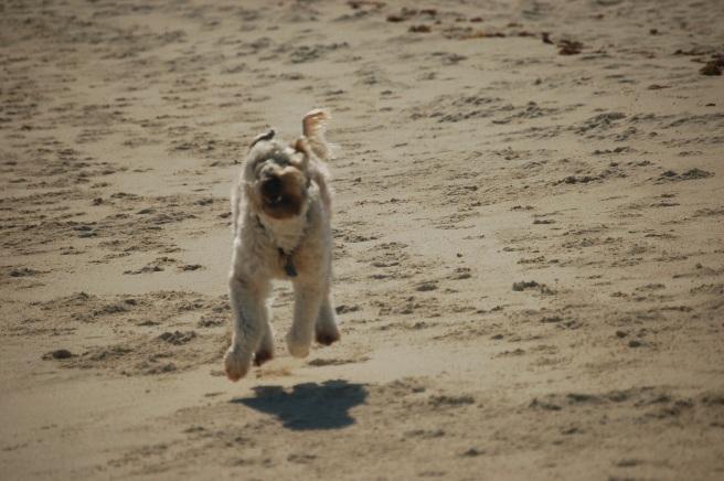 Farley Running Happiness