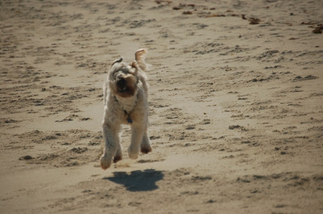 Farley Running Happiness