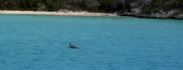 Dolphins at Sand Dollar