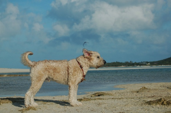 Farley in Bahamas