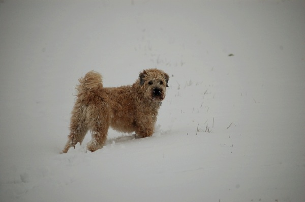 Farley In Snow