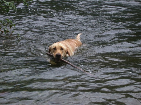 Chica and stick