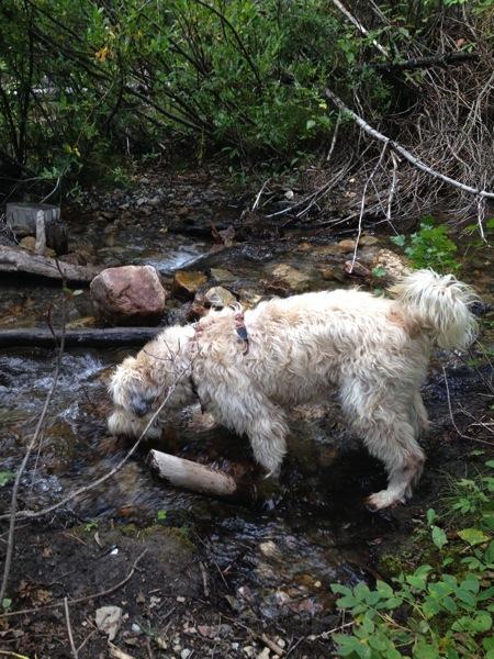 Farley in stream