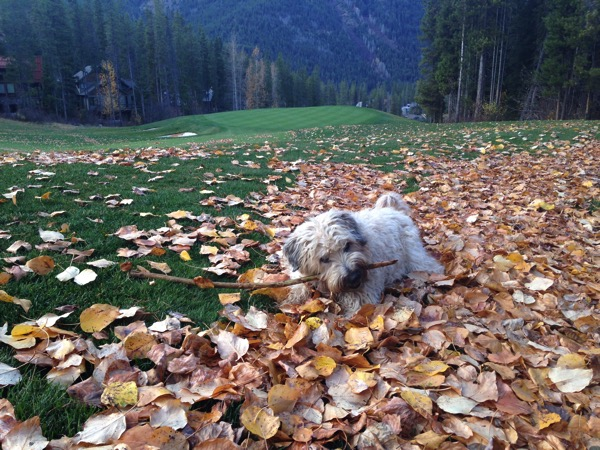 Farley in Leaves