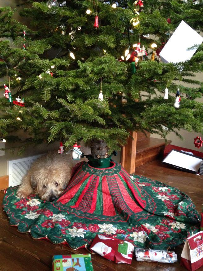 Farley under tree