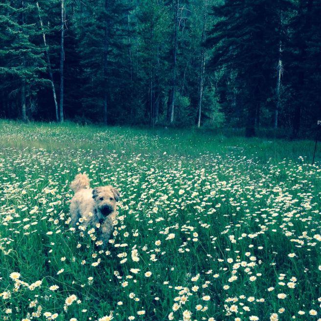 Farley in Flowers