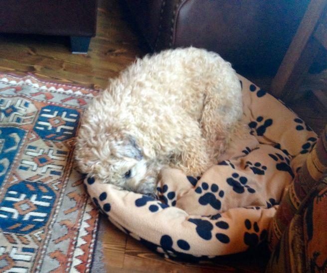 Farley napping
