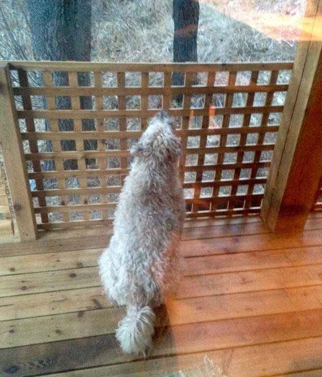 Farley watching sqirrel