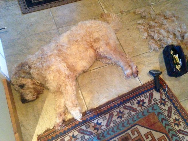 Farley groomed