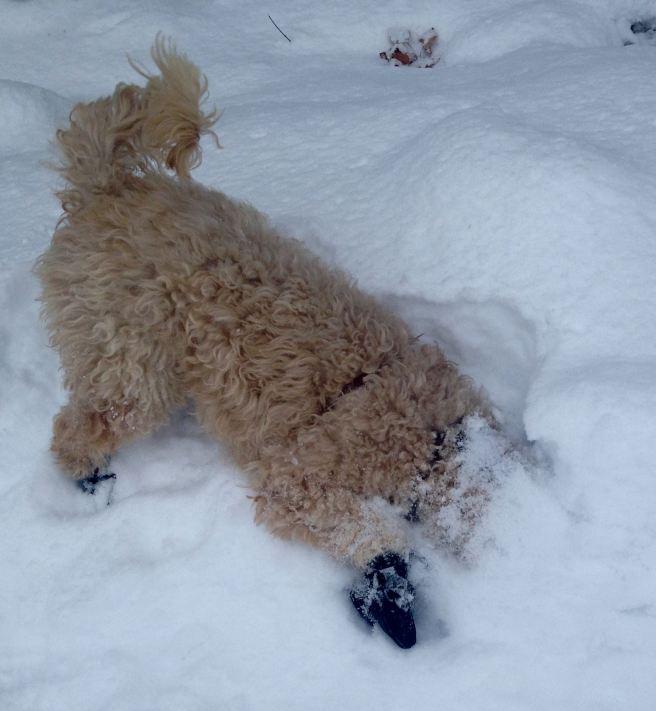 Farley burying his face