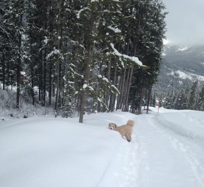 Farley Nordic skiing 2