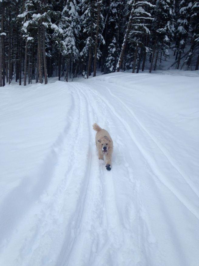 Farley Nordic Skiing
