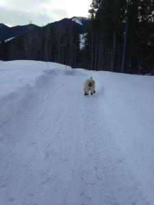 Farley Running 1
