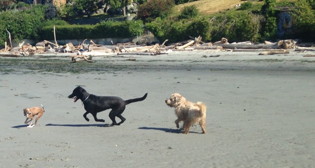 3 dogs on beach
