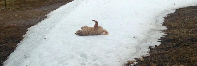 Farley Snowmaker
