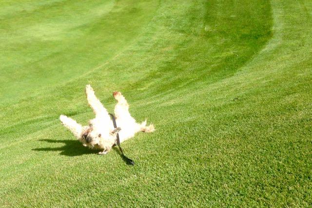 Farley rolling downhill