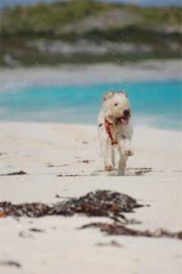 Farley running on beach