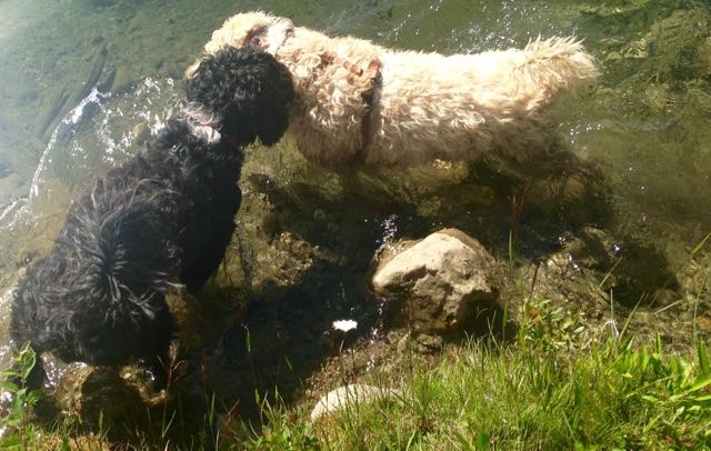 Flint, Farley in pond