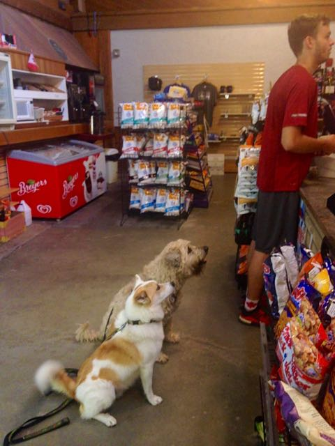 Dogs at General Store