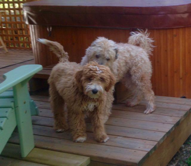 Farley and Moca
