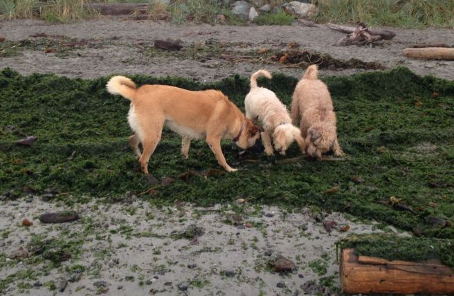 Farley Seaweed 2