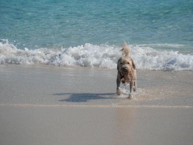 Farley on Beach