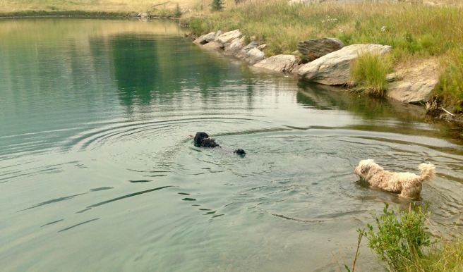 Farley Flint Pond