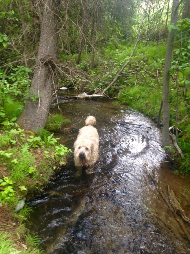 Farley In Creek