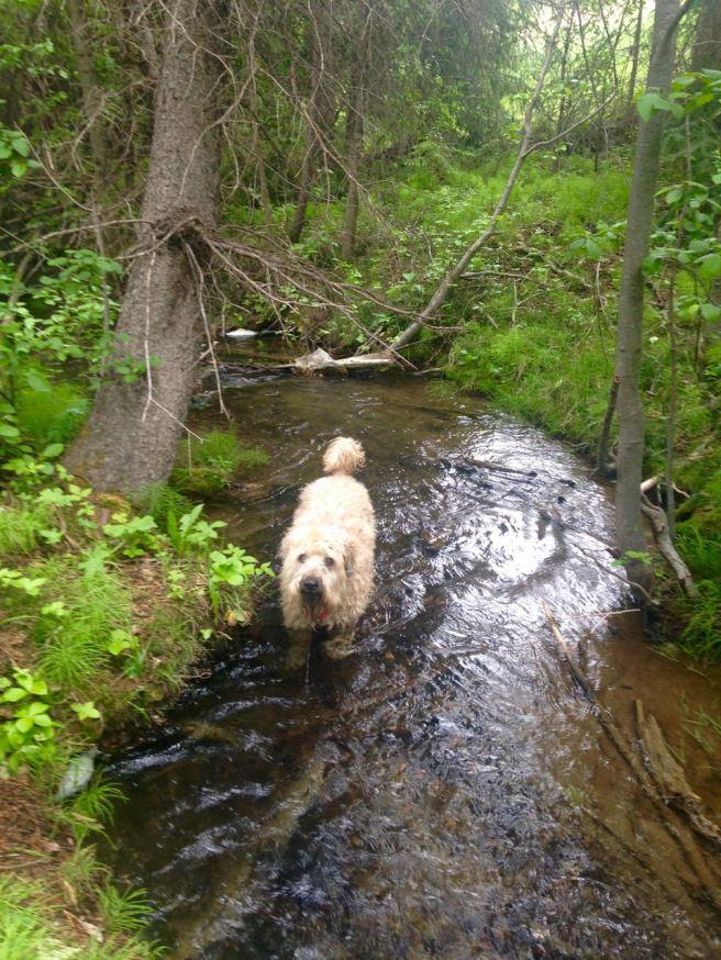 Farley In Creek