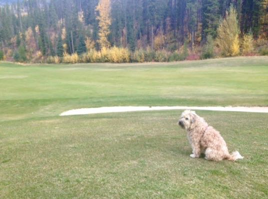 Farley on Golf Course