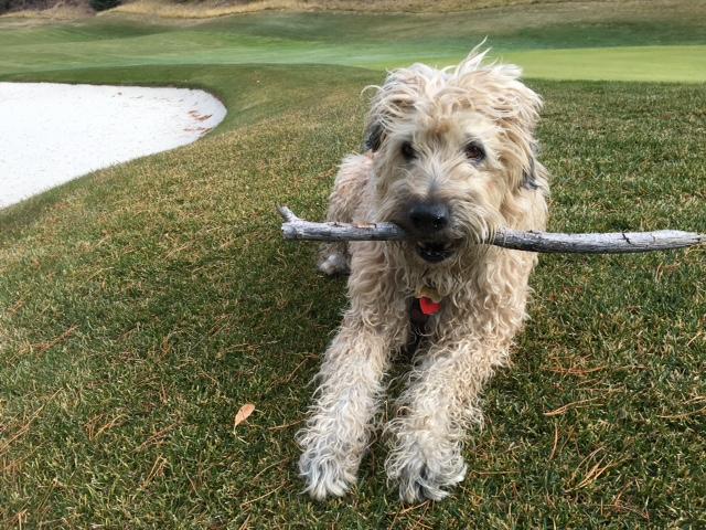 Farley w stick