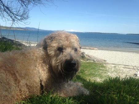 Farley at beach